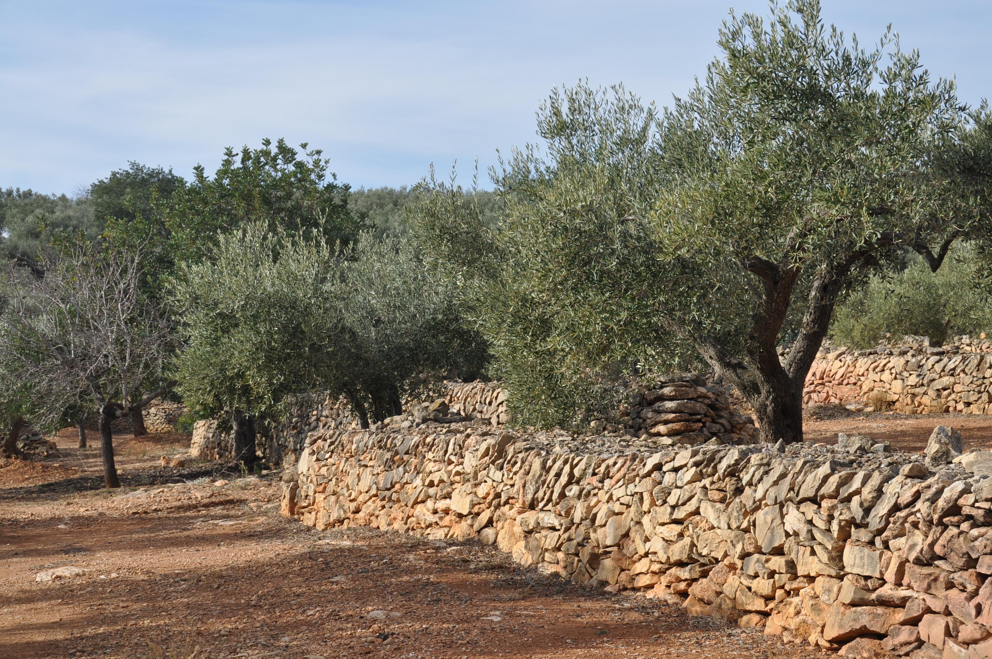 Terrassen sind charakteristisch für die Landschaft der Region